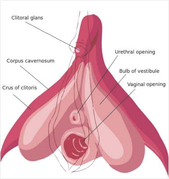 G Noktası ve Klitoris İlişkisi